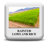 https://sites.google.com/a/irri.org/inger/met/ecosystems/rainfed-lowland