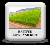 https://sites.google.com/a/irri.org/inger/met/ecosystems/rainfed-lowland